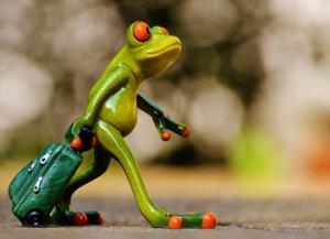 frog-1033313_960_720